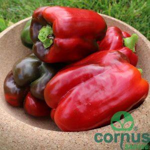 Paprika-Kalifornijsko-čudo
