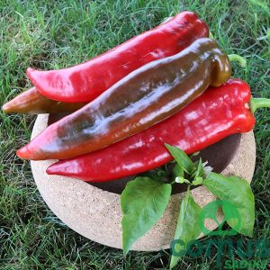 Paprika-kurtovska-kapia