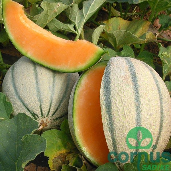 Melona-Talisman-F1