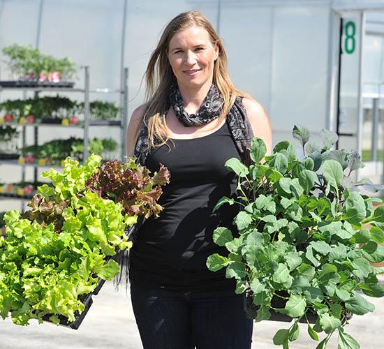 Sadike zelenjave in vrtnin Cornus - Sandra Belec