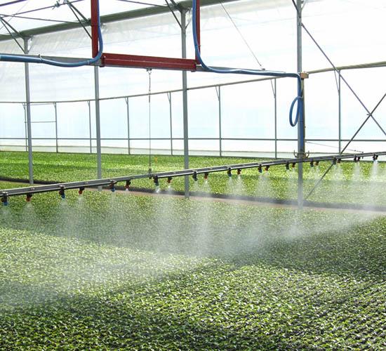 Sadike zelenjave in vrtnin Cornus - zalivanje sadik