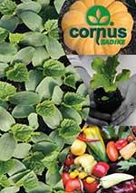 Sadike Cornus - katalog 2020