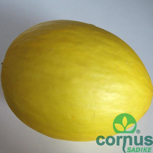 Melona-Frevo-F1-01