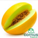 Melona-Frevo-F1-02